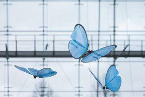 emotionbutterfliesfesto